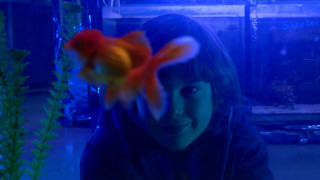 Still image from the film: GOLDFISH